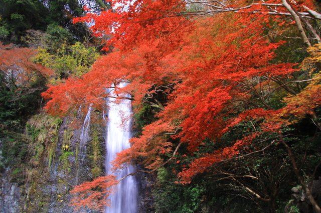 箕面の滝と紅葉