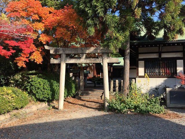 豐國神社の紅葉
