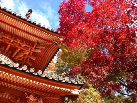 牛滝山 大威徳寺の紅葉情報