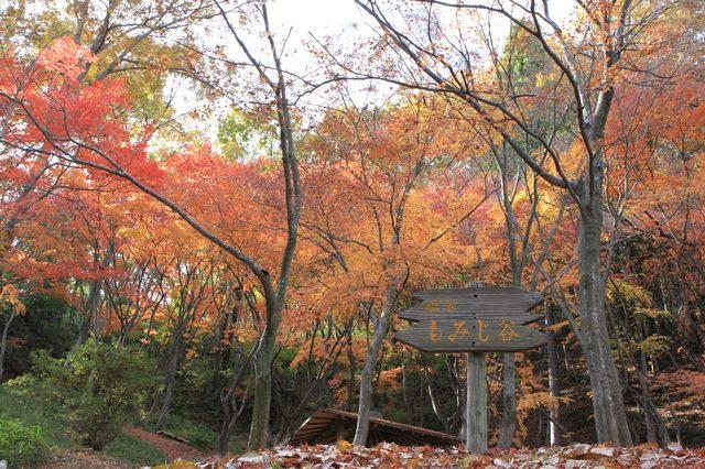 摂津峡 もみじ谷の紅葉