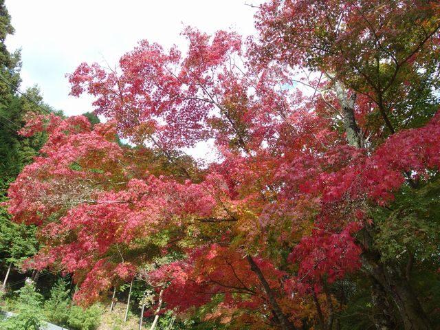 摂津峡 紅葉