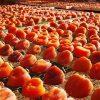 干し柿は栄養満点のスーパーフード
