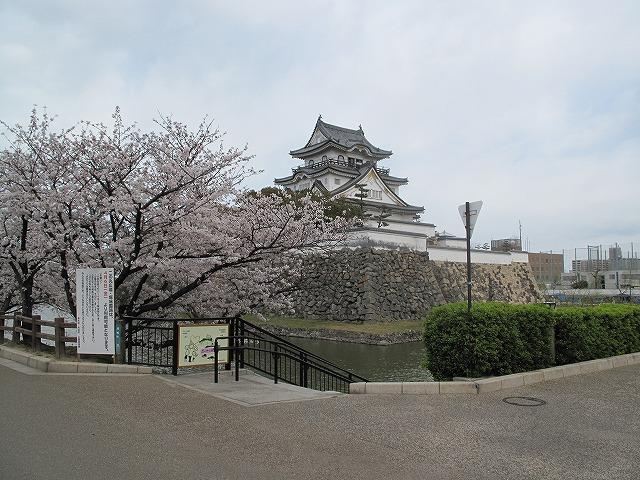 岸和田城の桜