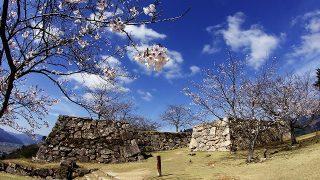 竹田城の雲海と桜