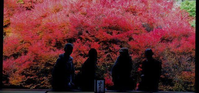 安国寺のドウダンツツジの紅葉